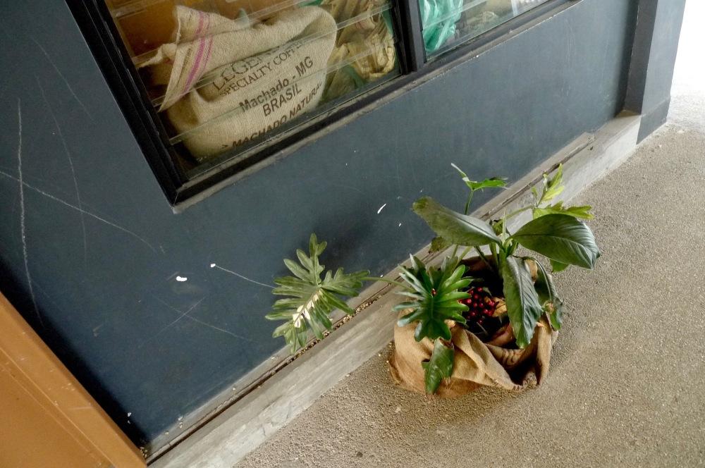 Plants (1).jpg